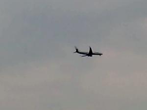 芝桜 飛行機