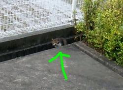 田んぼの近くに猫
