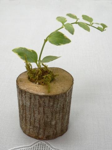 間伐材鉢植え宣材
