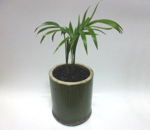 竹の鉢植え宣材①圧縮