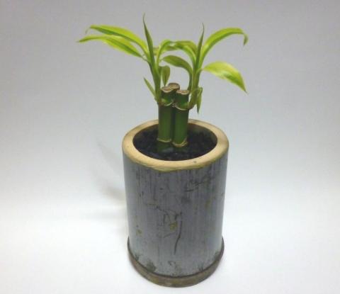 竹の鉢植え宣材②圧縮