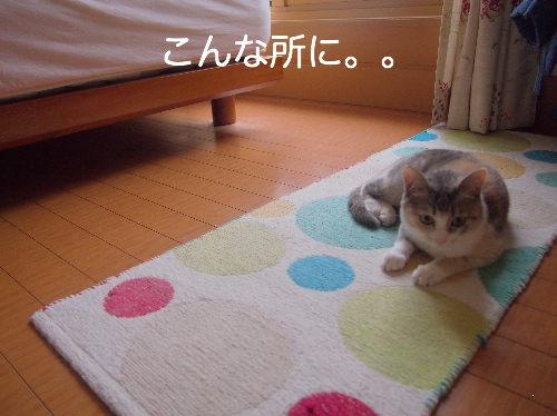 P6114148.jpg