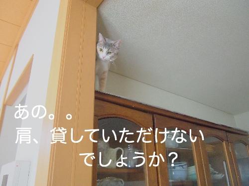P7184855.jpg