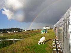 [写真]受付ハウス上空に架かる大きな虹と草を食べるヤギのアラン