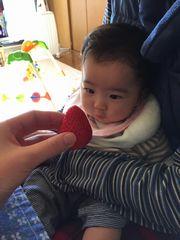 [写真]大粒イチゴをじっとみつめる生後5か月の赤ちゃん