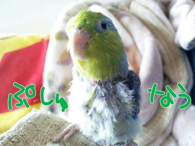 PicsPlay_1393813971980.jpg