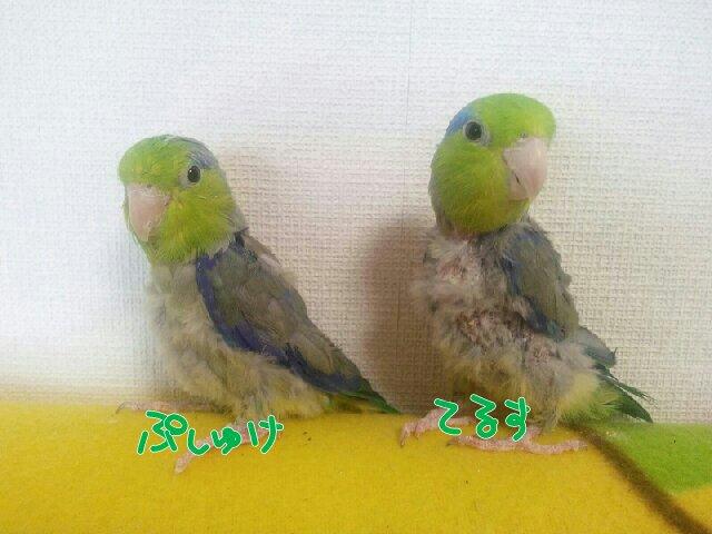 PicsPlay_1396594820006.jpg