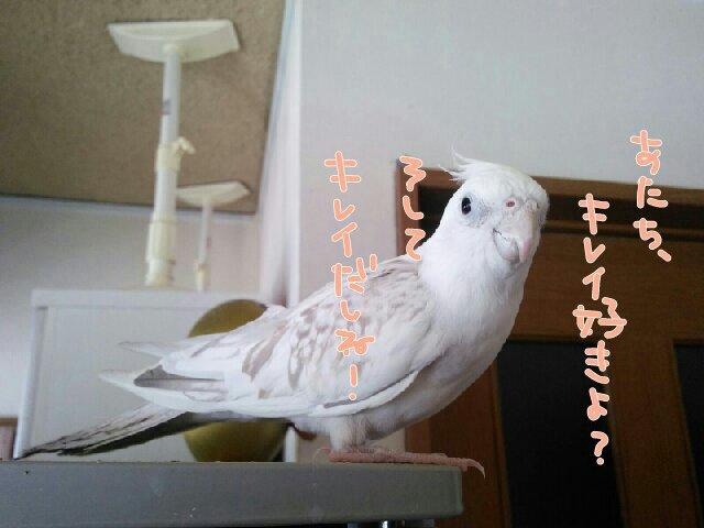 PicsPlay_1398135632722.jpg