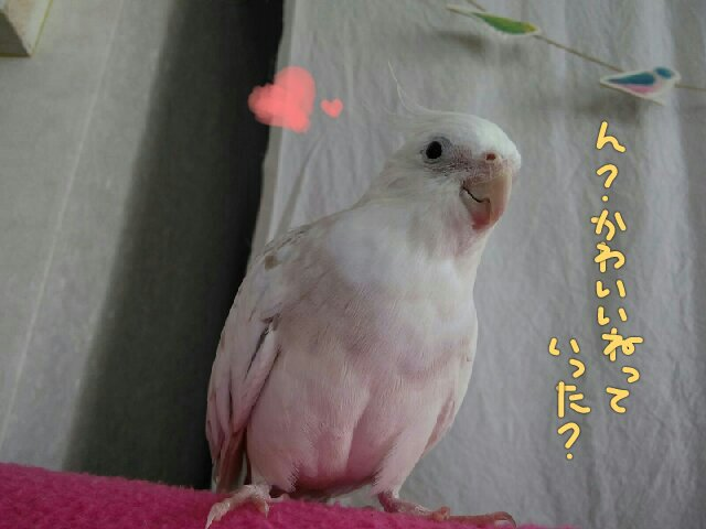 PicsPlay_1408000857841.jpg