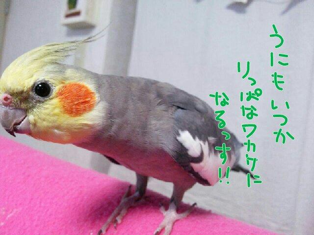 PicsPlay_1409568118407.jpg