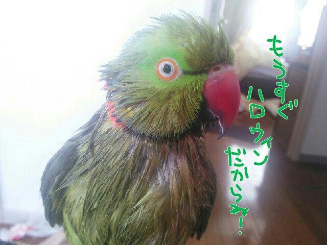 PicsPlay_1411524646879.jpg