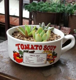 多肉・スープカップ