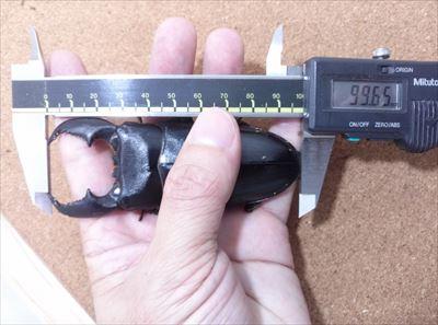JGM13B01-3_R.jpg