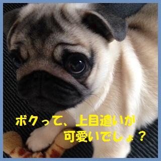09_201402201530354fd.jpg