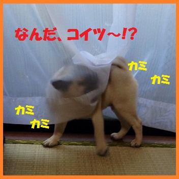 09_20140324214929e06.jpg