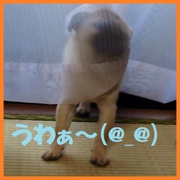 10_20140324214930ea8.jpg