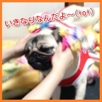 IMG_7069-1.jpg