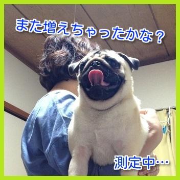 IMG_7097-1.jpg