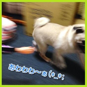 IMG_7111-1.jpg