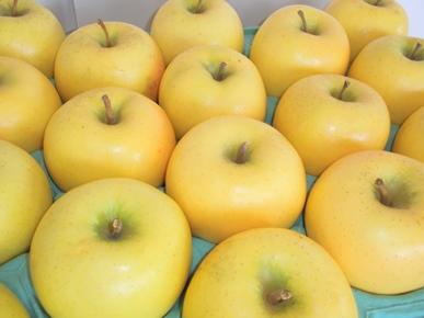 青森りんご シナノゴールド
