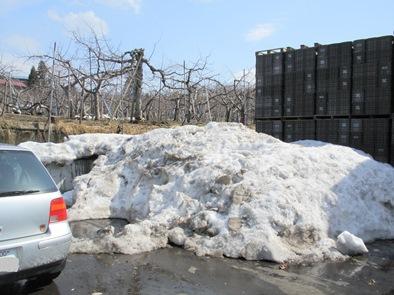 雪むろりんご