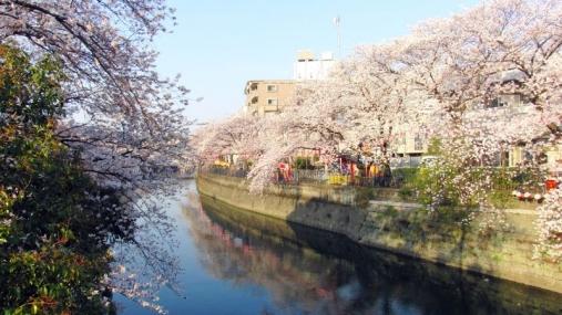 桜 2014-04-01 (1)