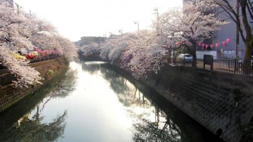 桜 2014-04-01 (4)