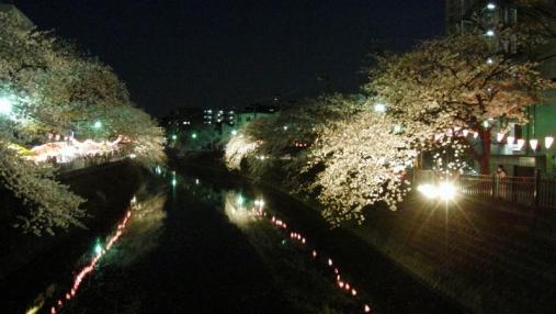 桜 2014-04-01 (11)