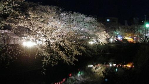 桜 2014-04-01 (7)