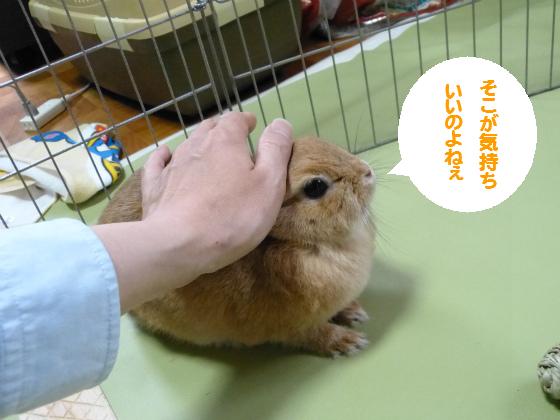 ぴょん子140619_06