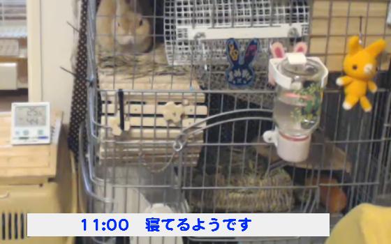豆助140921_01