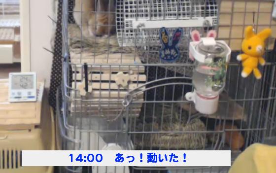 豆助140921_04