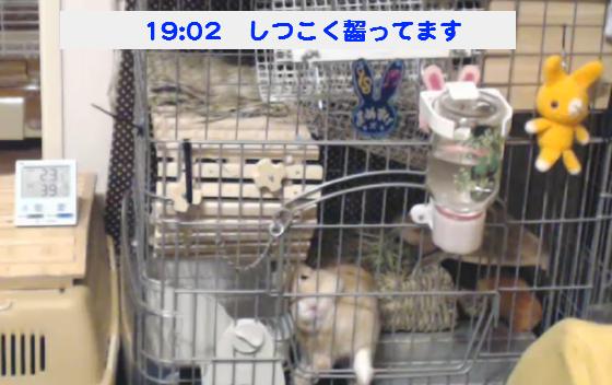 豆助140921_09