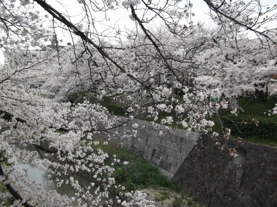 桜140404_01