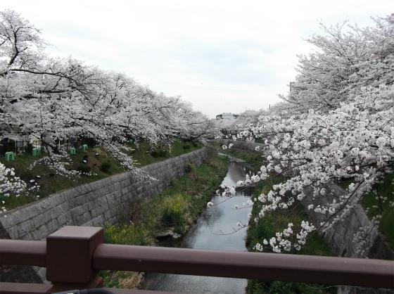 桜140404_02