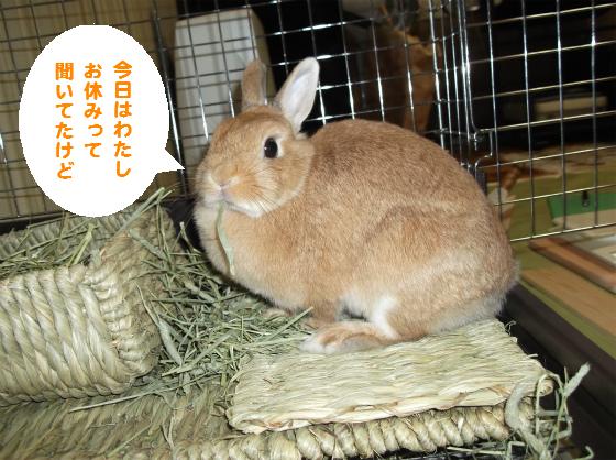 ぴょん子140710_02