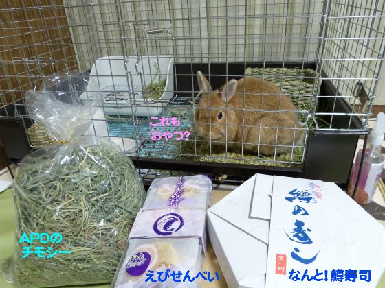 ぴょん子140426_02