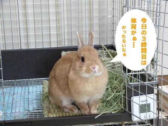 ぴょん子140503_05