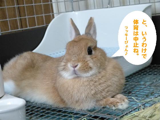 ぴょん子140503_08