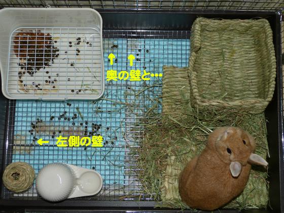 ぴょん子140602_02