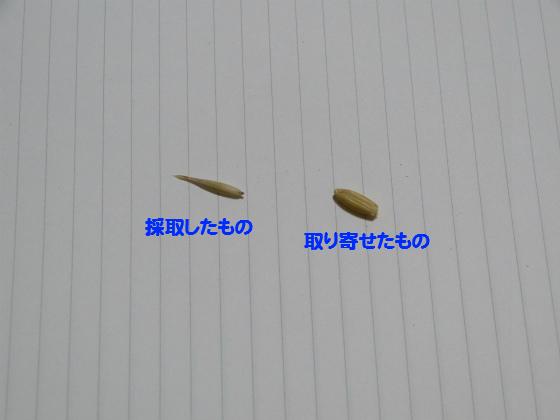 ぴょん子140708_08