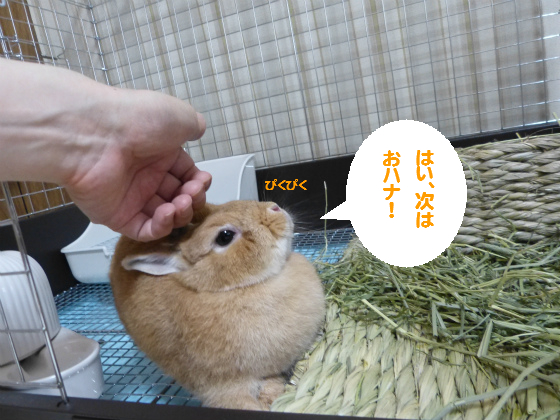 ぴょん子140708_09