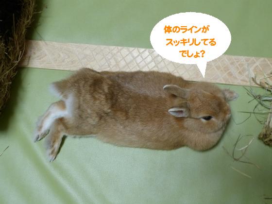 ぴょん子140809_06