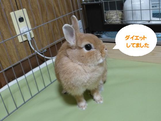 ぴょん子140809_01