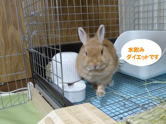 ぴょん子140809_05