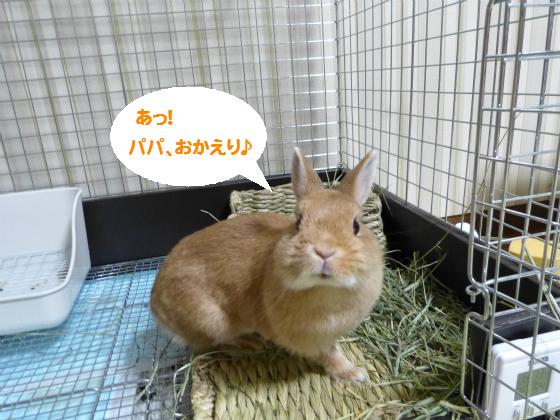 ぴょん子140827_03