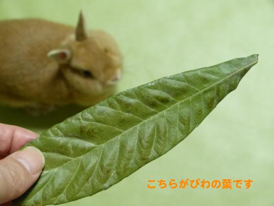 ぴょん子140901_01