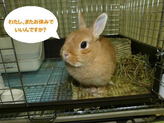 ぴょん子140921_01