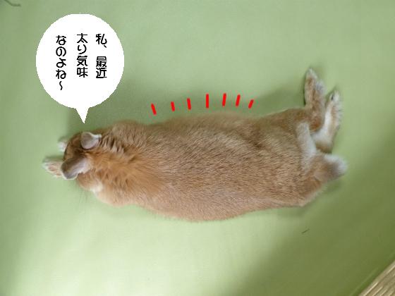ぴょん子140418_01
