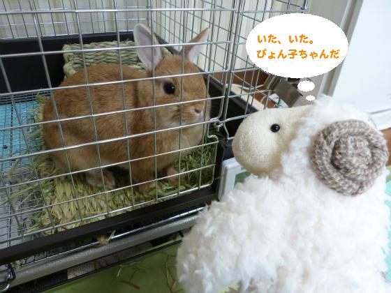 ぴょん子140520_02